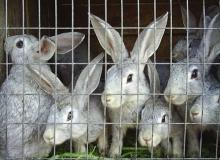 Неизвестное животное уничтожило 19 кроликов в Челябинской области