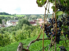 Субсидии крымским фермерам могут увеличить в 20 раз