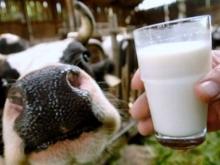 Разрабатывать программу развития молочного скотоводства для России будут американцы