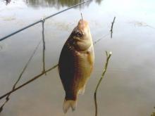 Ростовская межрайонная природоохранная прокуратура разъяснила ограничения в сфере рыболовства.