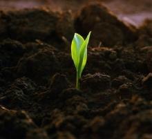 Как повысить урожаи без потери плодородия почв