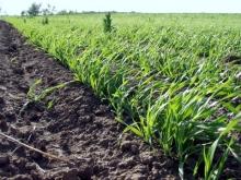 Ошибка агронома - обсев краев поля производится после завершения основного сева