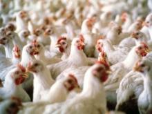 Южная Корея запрещает ввоз европейского мяса