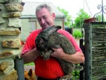 Как сделать пюре для кролика