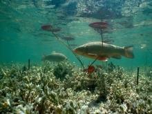 Учёные ЮНЦ РАН изобретают прибор, который позволит отслеживать рыб в малых водоёмах
