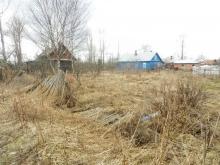 Запущенный сад: что делать, если вы купили участок со старым садом