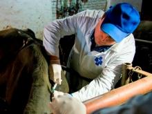 В Ростовской области проводится бесплатная вакцинация животных против бешенства