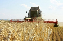 Прошлый год стал годом рекордного урожая. Однако на фоне областного триумфа многим земледельцам запомнится и огорчение