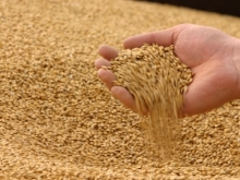 Россия экспортирует до 20 тонн зерна