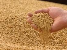 Министерство сельского хозяйство предлагает производителям выкупить зерно из интервенционного фонда