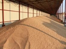 Объемы закупки интервенционного зерна снизились