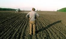 Недавно был на пресс-конференции замгубернатора РО Вячеслава Василенко. Там помимо прочего (ссылка ) ему задали вопрос: количество фермеров сокращается, они исчезают постепенно: что будете делать в минсельхозе с этим? Он дал ответ, который, думаю, многих заинтересует.