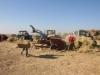 Торговля сеном – важная статья дохода донского фермера-животновода