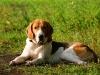 Любовь к охотничьим собакам держит фермера в тонусе