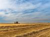 Зерновая сверхдержава: Россия диктует цены на мировом рынке зерна