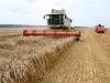Аграрии Ростовской области обсудили жатву на предуборочном совещании в Тарасовском районе