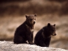 Китайский фермер спутал медвежат с щенками