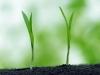 Ошибка агронома №33 - Десиканты бывают разные