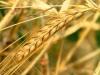 В Ростове-на-Дону прошел Всероссийский Продовольственный форум