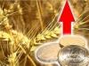 цены на зерно и масличные