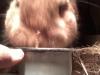 Ферма капитана: бывший офицер милиции стала успешным кролиководом