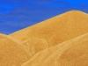 В Ростовской области сельхозпроизводители засыпали федеральную трассу зерном