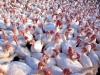 На чьи рынки смотрят отечественные птицеводы