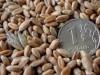 Недавно Минсельхоз заявил о том, что готов радикально сократить количество выдаваемых субсидий — с 54 до 7 видов. Это очередная мера, которую продвигает министр Александр Ткачев. Будет ли она эффективной?