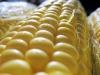 Применение гербицидов на кукурузе