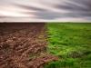К донской земле кущёвские фермеры отнеслись как к родной, и она ответила взаимностью