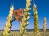 В Краснодарском крае борются с грызунами