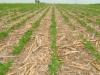 Клуб агрознатоков обсудит опыт прямого посева австралийских фермеров для юга России