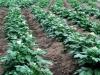Россельхознадзор запретил поставки растительной продукции из Албании на территорию России