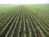 В этом году главная задача для аграриев – правильно сориентироваться в сложившейся ситуации