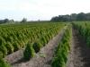 Крупнейший производитель семян овощей теперь выращивает и декоративные культуры