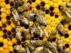 Миллион пчел пострадали при ДТП во Франции