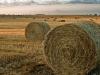 У воронежского фермера украли 400 килограммов сена