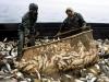 Рыбаки обратились с письмом против Минсельхоза к Путину