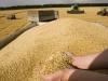 """За летние месяцы Россия увеличила экспорт зерна на 26,6% относительно того же периода прошлого года, сообщают """"Ведомости"""""""
