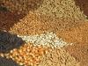 На Дону самый большой процент в России семеноводческих хозяйств