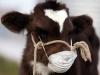 Александр Овчаров: «Владельцы ЛПХ должны понимать, что ветеринарно-санитарная экспертиза на бойне и на рынке – это разные услуги»