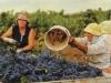 Забыл рассказать забавную историю. На выставке «Кубанская ярмарка-2016» недавно выступал у нас один фермер, винодел. Очень яркое получилось выступление. Он начал с того, что заявил собравшимся коллегам: «Слушаю вас и понимаю, что у нас совсем другие проблемы — вы, в отличие от нас, хотя бы занимаетесь легальным бизнесом»...