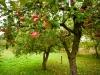 В Туапсе появился первый фермерский сад
