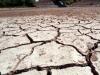 Ситуация близкая к чрезвычайной: растения на полях страдают от отсутствия влаги