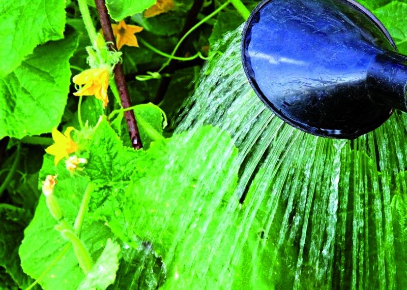 Особенности летнего полива овощных культур