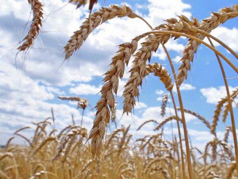 Зерновой хаб, бюджетный центр животноводства: обзор СМИ Тамбовской области